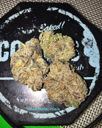 Sunset Sherbet by Treehawk Farms – Cookie Queen Certified